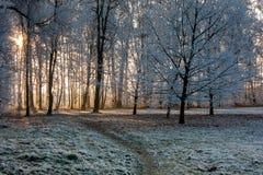 Zima park z zamarzniętymi drzewami Obrazy Royalty Free