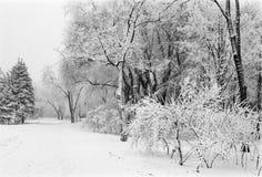 Zima parkowy pas ruchu Fotografia Royalty Free