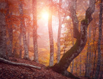Zima piękny las Obrazy Stock