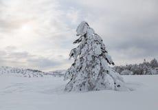 Zima piękny las Obraz Royalty Free