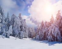 Zima piękny las Zdjęcia Royalty Free