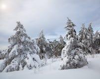 Zima piękny las Obrazy Royalty Free