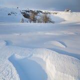 Zima piękny las Fotografia Stock