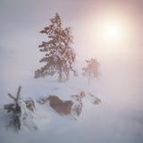 Zima piękny las Zdjęcia Stock