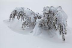 Zima piękny las Zdjęcie Royalty Free