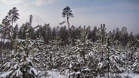 Zima pierwszy plany i śniegu krajobraz obraz stock