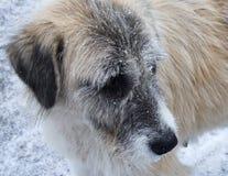 Zima pies zdjęcie royalty free