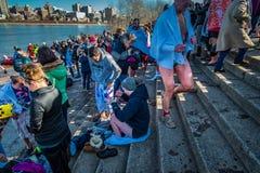 Zima pingwinu skok do wody przy Susquehanna Obrazy Royalty Free