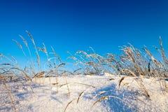 Zima pole Zdjęcie Stock