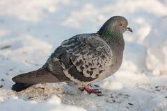 Zima portret Zdjęcia Royalty Free