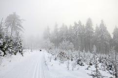 Zima przecinającego kraju krajobraz Zdjęcia Stock