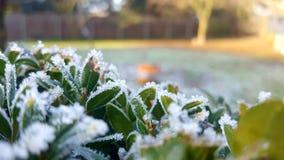 Zima przychodzi Zdjęcia Royalty Free