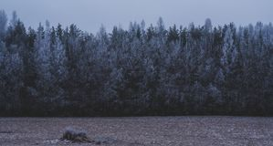 Zima przychodzi lukrowy morze Nic bije skały obraz royalty free