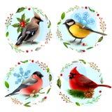 Zima ptaków projekta pojęcie Fotografia Royalty Free