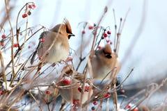 Zima ptaki Zdjęcia Royalty Free