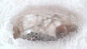 Zima ptasi dozowniki 3 zbiory wideo