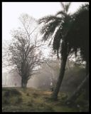 Zima ranek zdjęcie stock