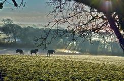 Zima ranek Obraz Royalty Free
