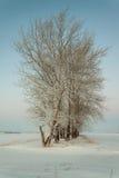 Zima ranek Fotografia Royalty Free