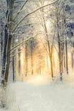 Zima ranek Zdjęcia Stock