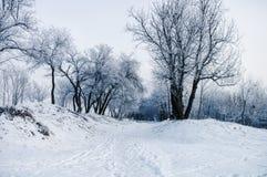 Zima ranek Drzewa w śniegu Zdjęcie Royalty Free