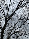 Zima ranek zdjęcia royalty free