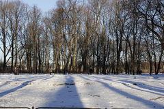 Zima ranek w parku Obraz Royalty Free