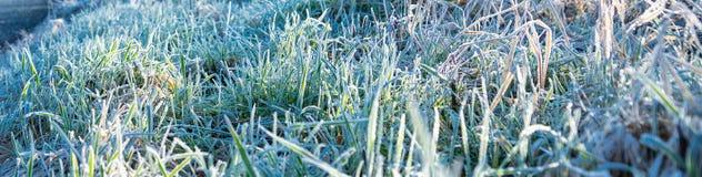Zima ranku mróz na trawie - sztandaru wizerunek obrazy royalty free