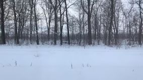Zima rosjanina krajobraz od taborowego okno, autobus, samoch?d zbiory