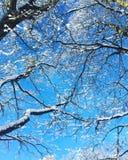 Zima rozgałęzia się bluesky wint Obraz Royalty Free