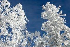 Zima rozgałęzia się z śniegiem -5 obrazy stock