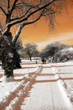 zima słońca Zdjęcia Royalty Free