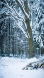 Zima scena Obrazy Stock