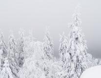 zima scenerii Obraz Royalty Free