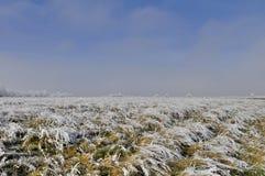 Zima segregująca z frosted trawą Obrazy Royalty Free