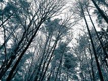 Zima sezonu gałąź jako natury tło zdjęcia stock