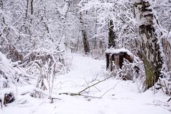 Zima sposób, drewna ogrodzenie i brzoza, fotografia stock