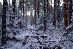 Zima sposób i brązu drzewo fotografia royalty free