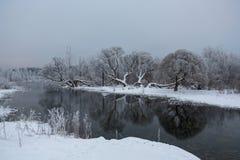 Zima staw z drzewami na brzeg Obraz Royalty Free