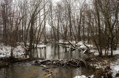 Zima strumień z bóbr tamą Zdjęcia Royalty Free