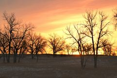 zima sunrise drzew Obrazy Royalty Free