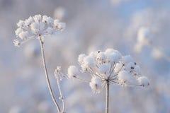 Zima szczegół Zdjęcia Royalty Free
