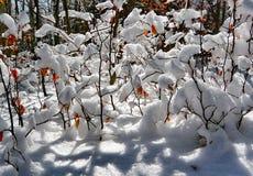 Zima szczegół Obrazy Royalty Free