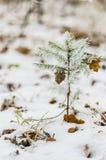 Zima, tło, boże narodzenia, las, krajobraz, natura, śnieg Fotografia Royalty Free