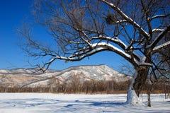 Zima tło 2 Zdjęcie Stock