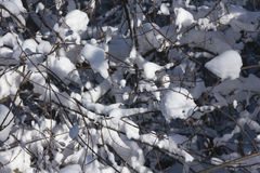 Zima, tło Obrazy Royalty Free