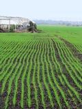 zima upraw, zdjęcie royalty free