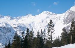 Zima w Alps Austria krajobrazowym lesie Zdjęcia Royalty Free