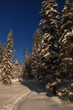 Zima w Altai górach Fotografia Stock
