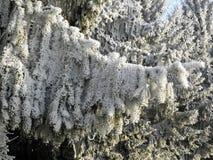 Zima w Chorwackiej wsi, szczegóły, 3 Fotografia Stock